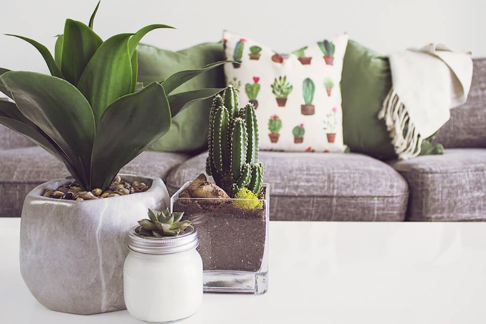 テーブルの上に置かれた観葉植物