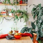 観葉植物がある室内の様子