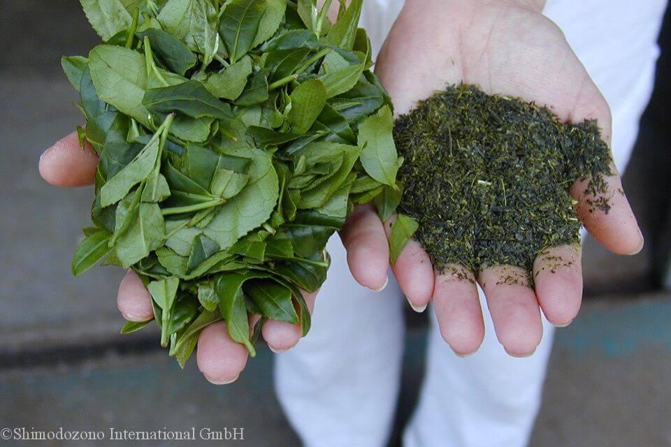 県鹿児島県南九州市で生産される茶葉
