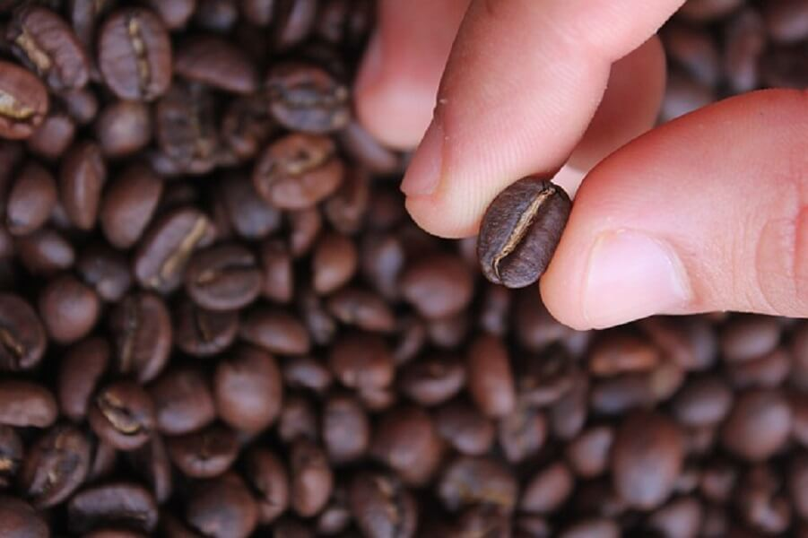コーヒー豆選び
