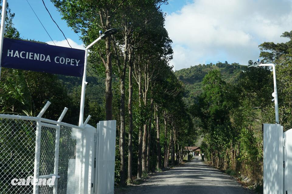 目指すは世界ナンバーワン! ハシエンダ・コペイ農園が切り拓くゲイシャと「GESHARY COFFE」の新たな未来