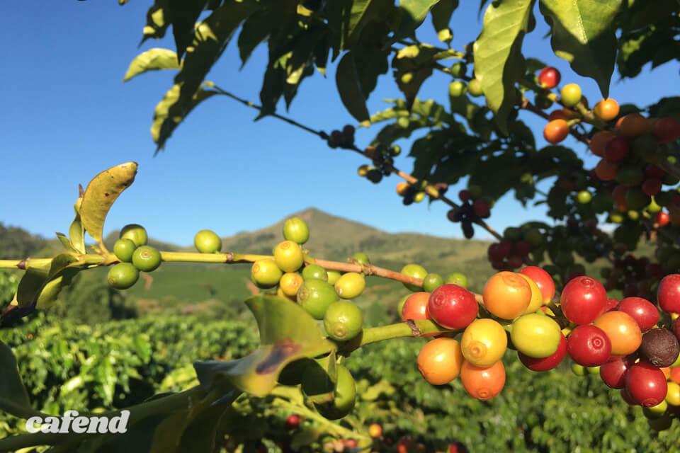 行けばコーヒーの未来が見える? コーヒー農園には出会いと発見がいっぱい!