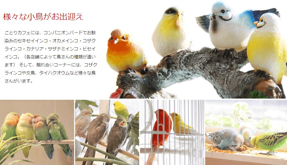 コンセプトカフェ_小鳥カフェ